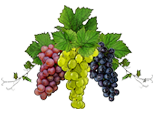 contact papagni fruit and juice, wine, concentrate
