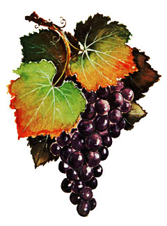papagni fruit and juice, wine, concentrate